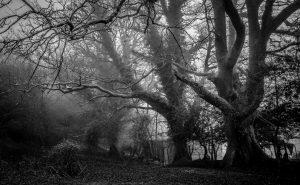 Root Cause Analysis Tree