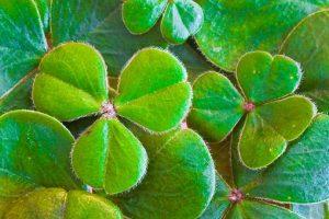 Verner Wheelock St Patricks Day